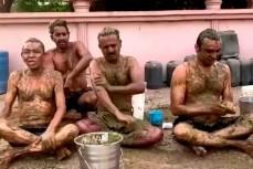 В Индии начали обмазываться навозом для защиты от коронавируса