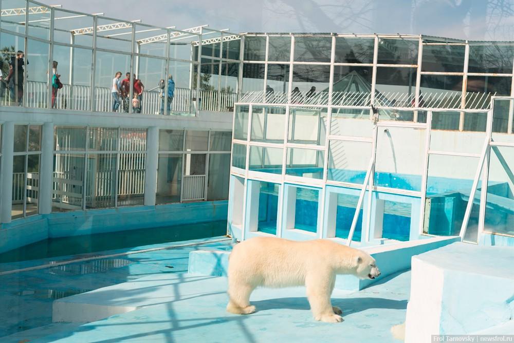 Белый медведь в вольере сафари-парка в Геленджике