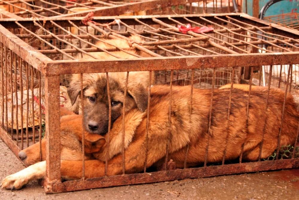 Собаки даже не могут встать в жестких низких клетках
