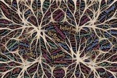 Мозг, образное изображение связей