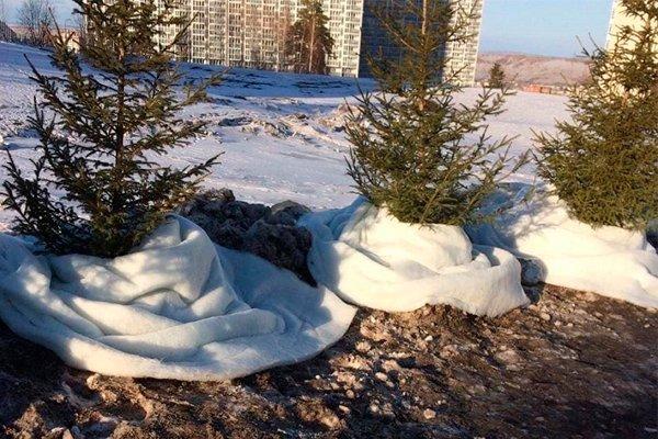 Ёлочки бережно укутанные синтепоном В Красноярске