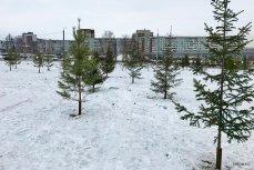 Озеленение Красноярске по новой технологии