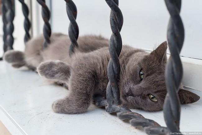Евпаторийский кот