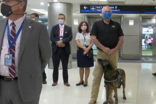 Международный аэропорт Майами (США) первым в мире нанял собак, натасканных на Covid-19