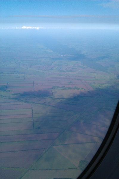 Вид с самолёта на реликтовый ленточный бор. Барнаул.