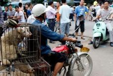 Собаки на продажу