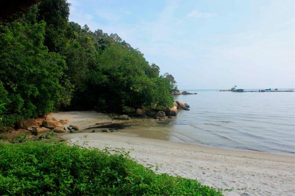 Красивая природа парка Taman Negara Pulau Pinang. Остров Пинанг (Пенанг), Малайзия.