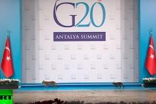 На саммите G20 в Турции на сцену между официальными мероприятиями пробрались кошки.